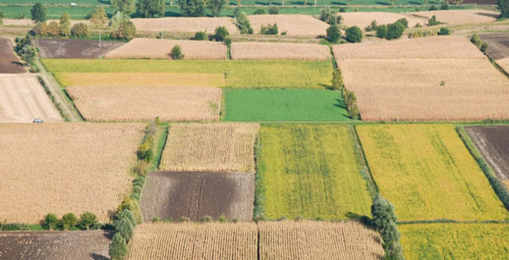 terreni agricoli gorla minore