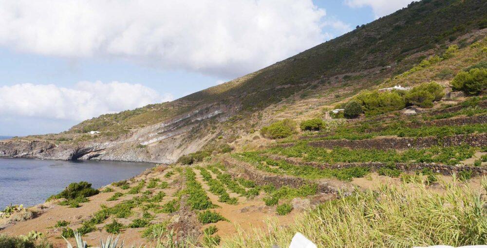 pantelleria donnafugata zibibbo