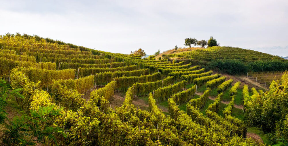 vigne monferrato vendita